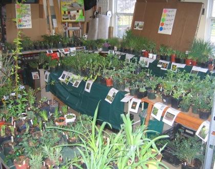 Plant Sale Tips Video