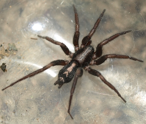 Rob S Plants Spiders