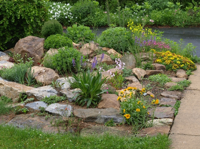 Rock garden ideas flower photograph list of plants we grow for Landscaping rocks and plants